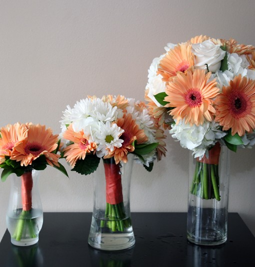 GERBERA COLLECTION
