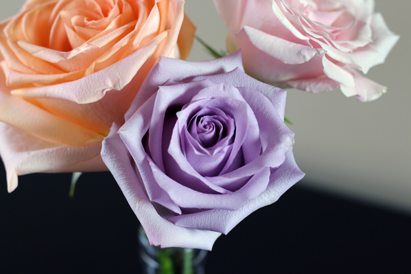 PURPLE, CORAL, PINK ROSE